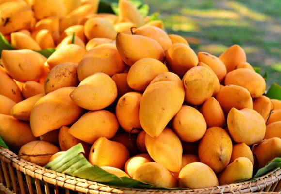 2 bonnes raisons de consommer de la mangue africaine